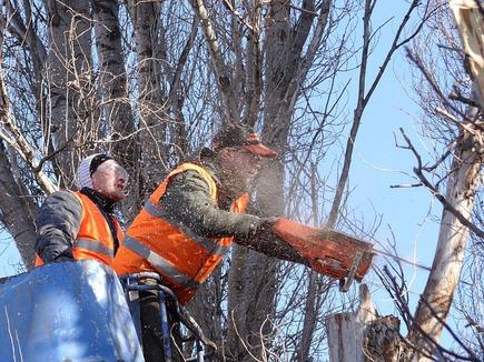 Abattage d'arbre : travaux dangereux et délicats