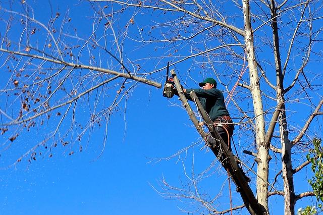 Comment réaliser l'élagage de vos arbres?