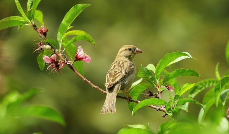 Comment aménager son jardin pour attirer les oiseaux?
