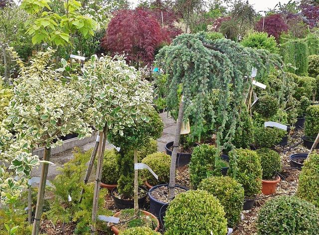 Comment choisir les espèces végétales à intégrer à son jardin?