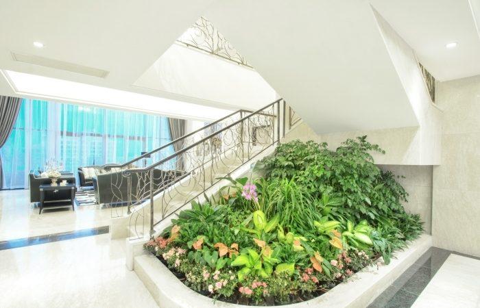 Entretien des plantes intérieures : évitez les produits chimiques