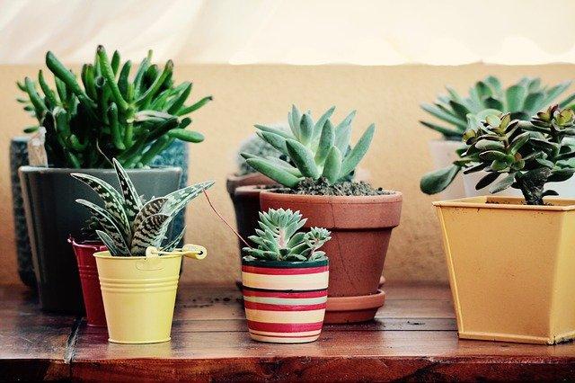 4 étapes incontournables pour réaliser un jardin de plantes grasses
