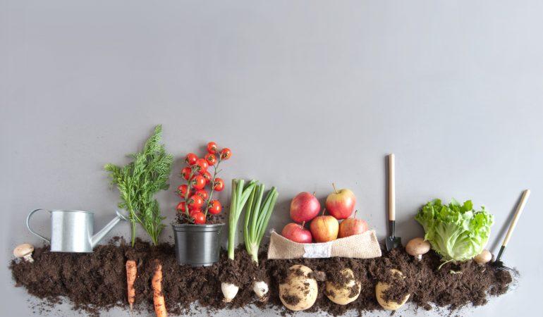 Jardin potager : le calendrier de semis de légumes