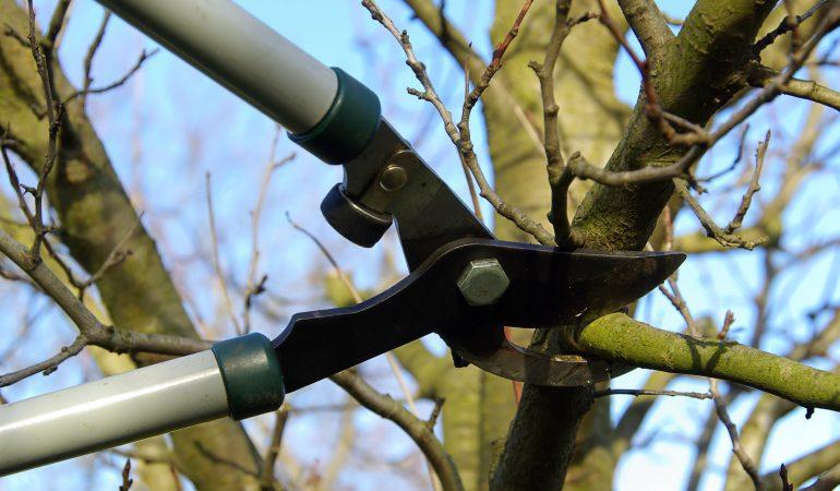 Élagage: faut-il attendre que l'arbre cicatrise naturellement?